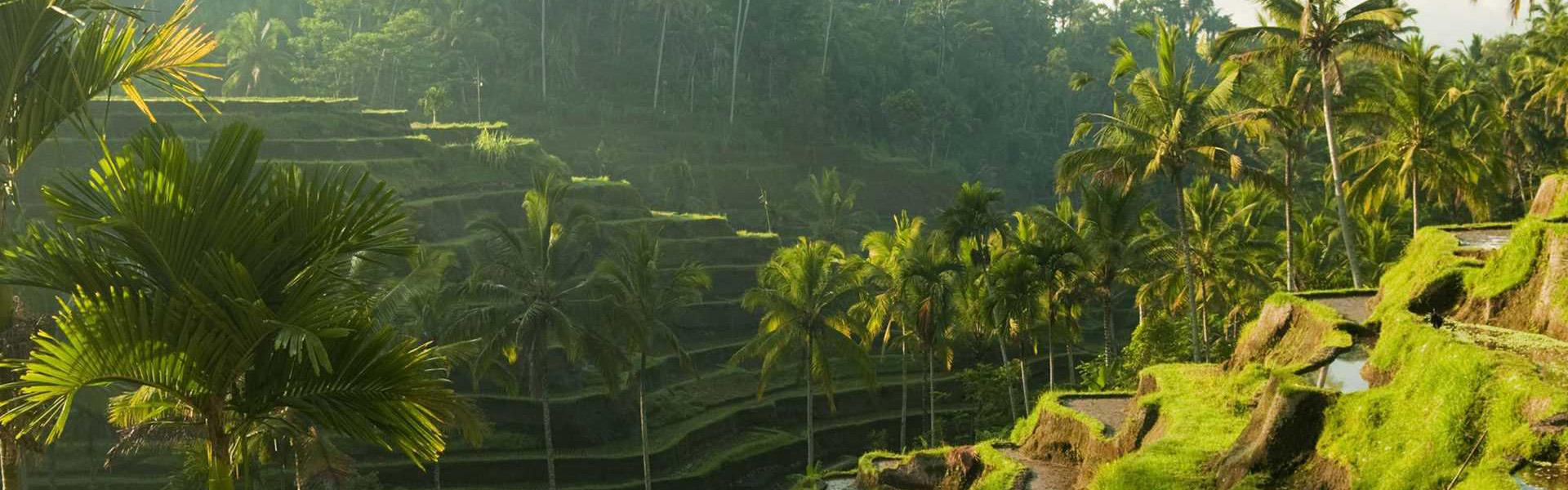 indonesia bali rice fields 1920x1080 - Bali - 20.10.2017