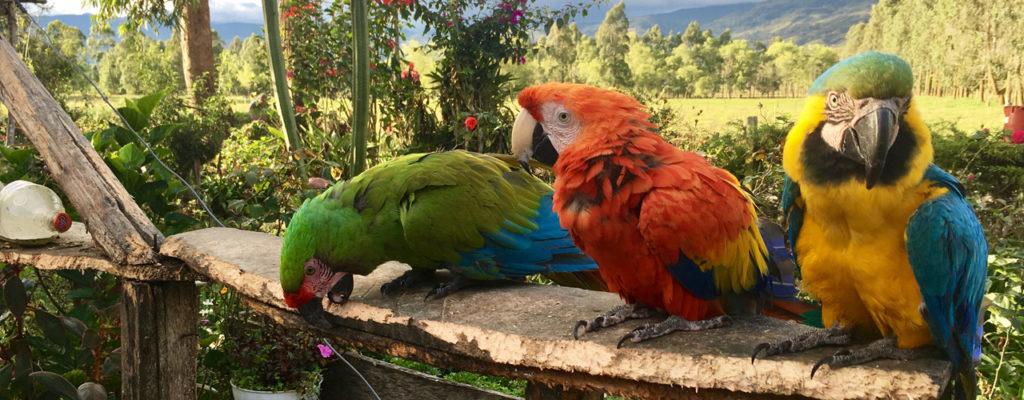 zdjęcia przycięte 2017 02 1024x400 1024x400 - <B> COLOMBIA / VENEZUELA </B> <br> 8 JANUARY 2020