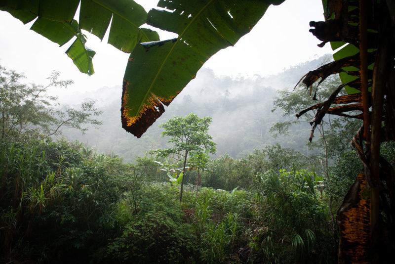 DSC0433 2 800x534 - Galeria-Kolumbia-2020